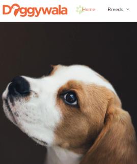 Doggywala